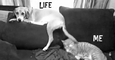 Life vs Me