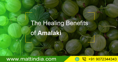 The Healing Benefits of Amalaki
