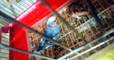 What happens if a hamster and a bird stay in same place