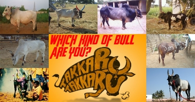 Which kind of bull (Kaalai) breed are you?