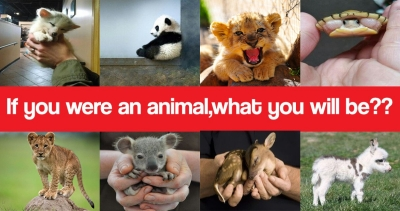 If you were an animal , Which animal you will be??